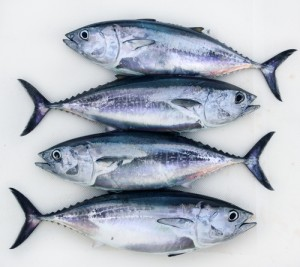 protein amount in fish weight loss for all