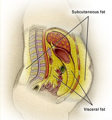 visceral fat storage where is it stored in body   weight