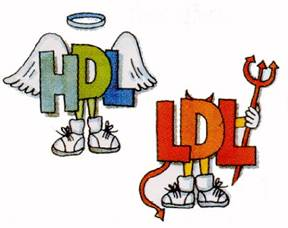 HDL & LDL Cholesterol Consequences
